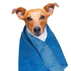 Refreshing Towel
